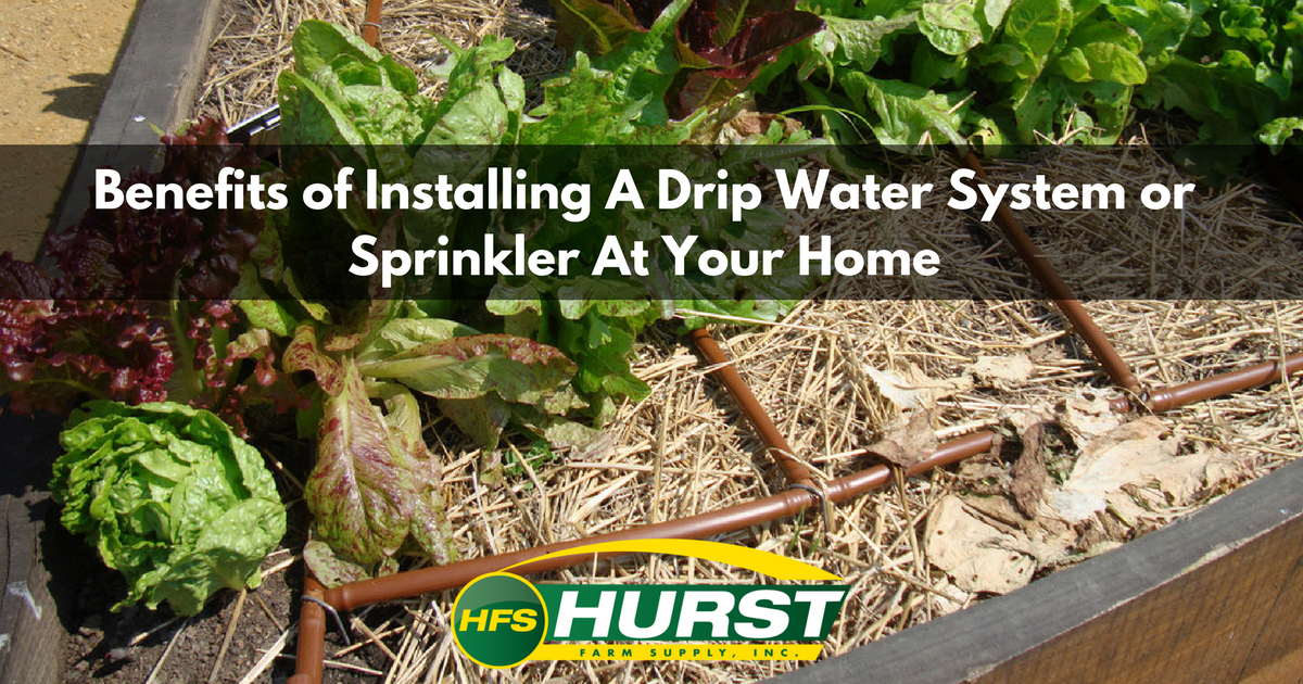 Installing A Drip System Or Sprinkler At Your Home