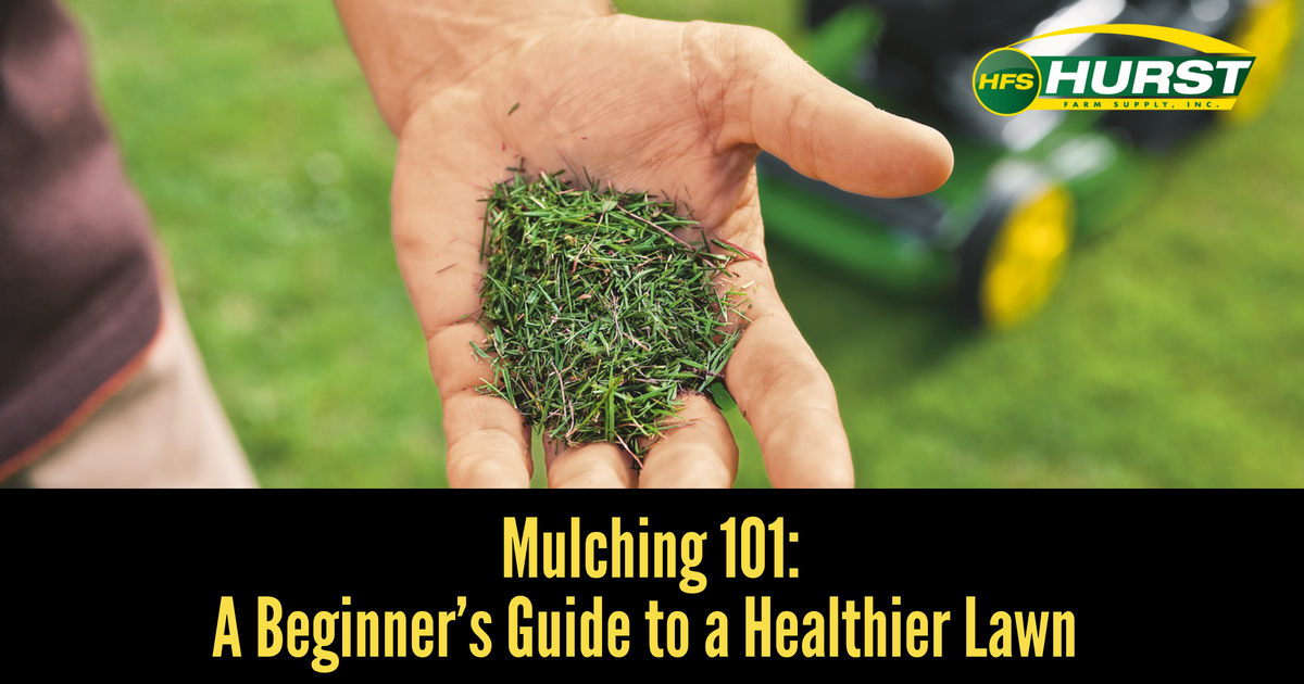 Mulching 101: A Beginner's Guide to a Healthier Lawn